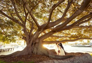 Dunbar House fig tree wedding