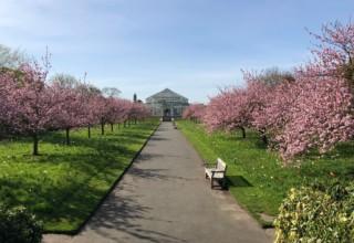 Kew Gardens Summer walks, Cherry Walk, Photography by Tony Kirkham