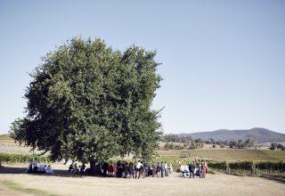 Yarra Valley Weddings Levantine Lost in Love Photography 1