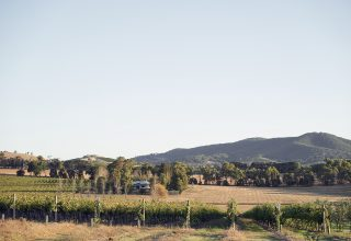Vineyard Views from Levantine Hill Lost in Love Photography