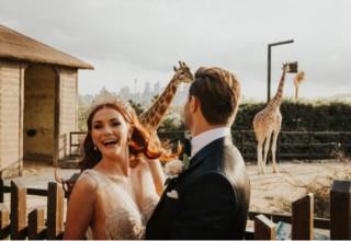 Taronga Zoo Couple Giraffes