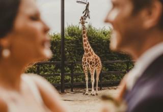 Giraffe Taronga Zoo Mosman Wedding Venues