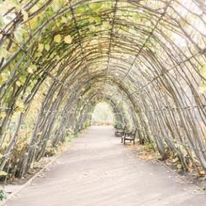 Kensington Palace Garden Walks, Garden
