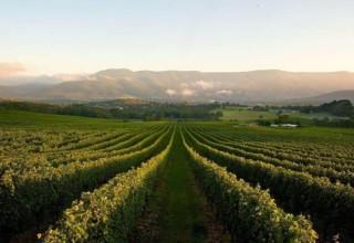 Chateau Yering Hotel, Yarra Valley Winery Venue, Vineyard Views