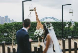 Epicure at Taronga Zoo, Unique Wedding Venue