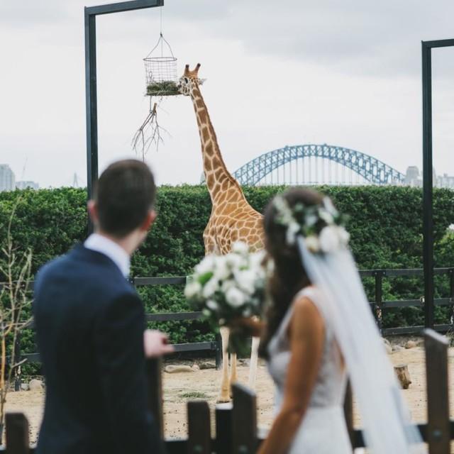 Weddings at Epicure at Taronga Zoo