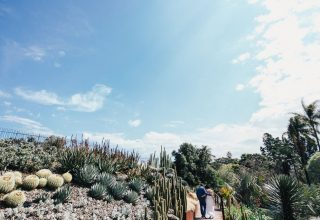 Bride and groom wedding photo at Royal Botanic Gardens Melbourne