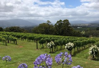 Elmswood Estate Winery Tours, Winery