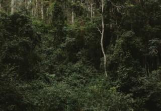 Bundaleer Rainforest Gardens Brisbane Wedding Venue Couple Outside Forest