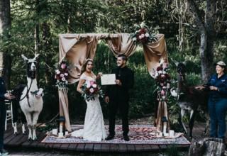 Bundaleer Rainforest Gardens Brisbane Wedding Venue Outdoor Ceremony